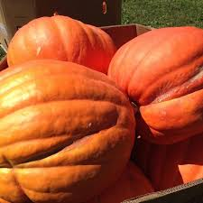 Pumpkin Picking Nj 2015 by 8 Best Top 8 Pumpkin Picking Farms For Families In New Jersey