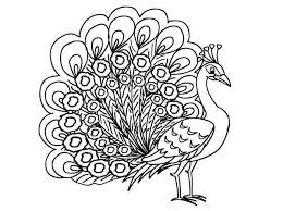 Peacock Coloring Pages Tail Expand