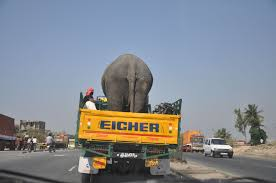 2 Guys, 2 Mopeds And An Elephant In A Truck....just Another Day On ... Two Men And A Truck Torrance Closed 13 Photos 17 Reviews Movers In Dmissouri Mo Two Men And A Truck 2 Guys And Ccinnati Best Resource Des Moines Urbandale Ia Movers Moving Rates 2018 Boulder Co Erie Pa Toll Free 18557892734 10 3934 Nw West Orange County Orlando Fl Deal With Logistics Of Political Movements Mn Image Kusaboshicom