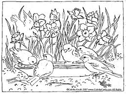 Daffodils Birds Birdbath Pen And Ink Drawing Coloring Page Printable Pdf By Catinka Knoth CatinkArts