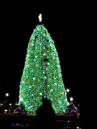 Christmas Tree Cataract Seen In by Hannatu U0027s Happenings February 2011
