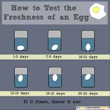 Bad Eggs Float Or Sink In Water by 25 Melhores Ideias De If Eggs Float No Pinterest Galinheiros