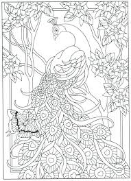 Peacock Coloring Books For Adults Secret Garden Book Advanced Pages Page Color Stencils Templates Patterns Colors