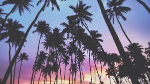 Palm Trees Sunset Tumblr Brilliant Tree Love With I