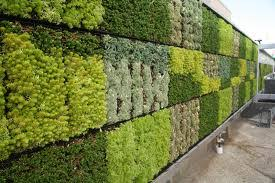 mur de separation exterieur le mur végétal conception réalisation et entretien