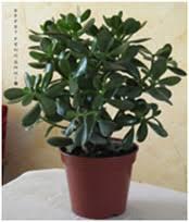 plante d駱olluante bureau maman et entrepreneuse les trois accessoires feng shui pour