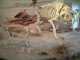 Agate Fossil Beds by Sunday With A Scientist