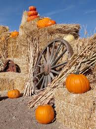 Eastern Iowa Pumpkin Patches by Pumpkin Patch Photo Backdrop 7815 Autumn Backdrops And Fall Decor