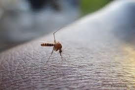 kleine mücken im haus effektiv bekämpfen 11 mittel