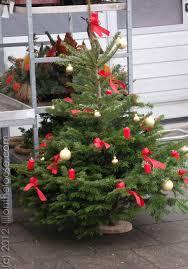 Travel Missteps A Grave Christmas Tree Mistake