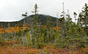 Christmas Tree Farm Near Lincoln Nh by 5 Scenic Family Hikes Around Lincoln New Hampshire The Daily