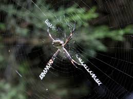 Remains Of The Day Spiders by 58 Best Webs Images On Pinterest Spider Webs Spiders And Dew Drops