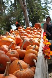Pumpkin Patches Near Bakersfield Ca by Banducci U0027s Family Pumpkin Patch Found The Bakersfield Pioneer
