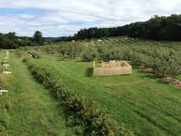 Chesterfield Pumpkin Patch Berry Farm by Go Out And Pick Your Own Apples Around Philly This Fall