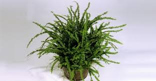 Pot Plants For The Bathroom by 7 Indoor Plants That Purify The Air Around You Naturally