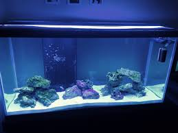 Aquascaping An Aqueon Tank - Reef Central Online Community Home Design Aquascaping Aquarium Designs Aquascape Simple And Effective Guide On Reef Aquascaping News Reef Builders Pin By Dwells Saltwater Tank Pinterest Aquariums Quick Update New Aquascape Of The 120 Youtube Large Custom Living Coral Nyc Live Rock Set Up Idea Fish For How To A Aquarium New 30g Cube General Discussion Nanoreefcom Rockscape Drill Cement Your Gmacreef Minimalist 2reef Forum
