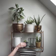 Pot Plants For The Bathroom by 25 Indoor Garden Ideas