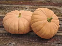 Connecticut Field Pumpkin For Pies by Long Island Cheese Pumpkin Baker Creek Heirloom Seeds