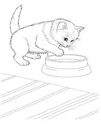 Reali Kitten Coloring Pages Cat And Realistic Related Post Cute Pa