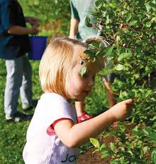 Owasso Christmas Tree Blackberry Farm by U Pick Locations For Fruits And Produce Edible Tulsa