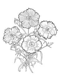 Carnation Flower Coloring Pages 1