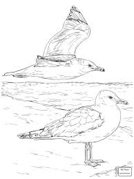 Coloring Pages Birds Seagulls At Island