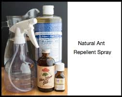 3 Best Homemade Ant Repellent Sprays Get Rid of Ants Naturally