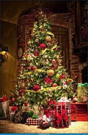 Plantable Christmas Trees Columbus Ohio 36 best christmas trees images on pinterest merry christmas
