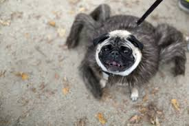 Tompkins Square Halloween Dog Parade by New York Park Goes To The Dogs For 25th Halloween Dog Parade Kutv