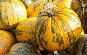 Cinderella Pumpkin Seeds Australia by 14 Unusual Pumpkins For Fall Decorating And Eating Too