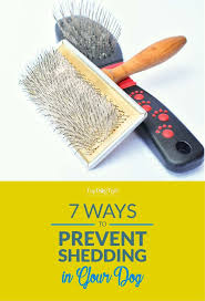 Dog Hair Shedding Blade by Best 25 Dog Shedding Ideas Only On Pinterest Itchy Dog Remedies