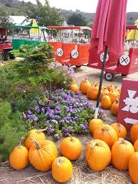 Half Moon Bay Glass Pumpkin Patch by 49 Best Nearby Activities In Half Moon Bay Ca Images On