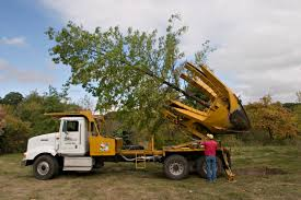 Large Tree Sales Illinois - Tree Transplanting Illinois | Big Tree ... Vkler Truck Sales And Service Competitors Revenue Employees Used Cars For Sale Peru Il 61354 Illinois Valley Auto Group Dan Kniep Morton 61550 Car Dealership 2008 Ford Super Duty F250 Srw Lariat City Ardmore 1964 F100 Classiccarscom Cc1037871 Wilmette Bus Inc Safety Lane Home Facebook Featured Suvs Trucks Sedans For In Barrington Vanguard Centers Commercial Dealer Parts Bob Jass Chevrolet Is A Elburn Dealer New Car Electric Pickup Truck Comes To Market Its Not From Tesla Plaza Services Trailers
