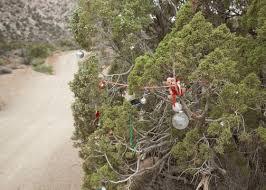 Desert Christmas Trees Tree Pass Nevada