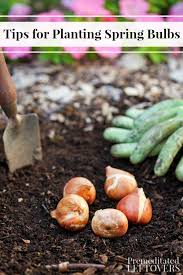 tips for planting blooming bulbs in the fall