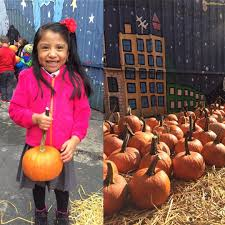 Piedmont Pumpkin Patch by Search Results Ioby