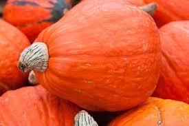Types Of Pumpkins For Baking by 10 Pumpkin And Winter Squash Varieties You Should Know The