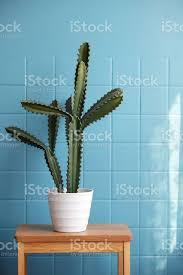 dekoration kaktus im wohnzimmer stockfoto und mehr bilder beton