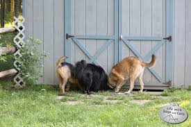 Dogs That Dont Shed And Smell by Dogs Vs Groundhog Life With Dogs And Cats
