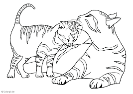 Kitten Coloring Page Pages For Kittens To Print Of