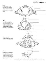 Anatomy Coloring Book For Yoga Musculoskeletal Pages