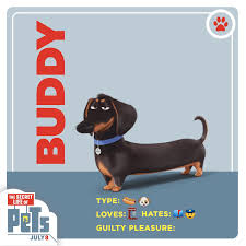Meet Buddy The Wiener Dog Hes The First To Arrive The Last To