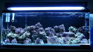 aquatic t5 ho 4 bulb 48 fixture review the reef tank