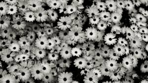Background Tumblr Vintage Black And White 3