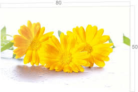 backofen herdzubehör bild motiv blumen gelb weiß