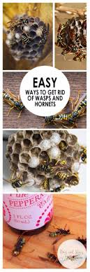 25+ Unique Get Rid Of Flies Ideas On Pinterest | Flies Repellent ... How To Keep Mosquitoes Away Geting Rid Of Five Tips For Getting Bugs And Pests On Your Patio Youtube To Get Chiggers Skin Body Yard Symptoms Fast Crawly Catures In My Backyard Alberta Home Gardening 25 Unique Rid Spiders Ideas Pinterest Kill Off Bug Control I Repellent Spiders Spider Spray Sprays Cutter 16 Oz Outdoor Foggerhg957044 The Of Time Tested Bob Vila Pictures With Japanese Beetles Garden Best Indoor Mosquito Killers Insect Cop