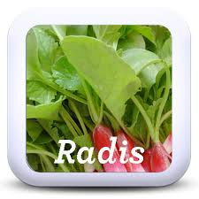 comment cuisiner les fanes de radis 7 recettes pour cuisiner les fanes de radis je cuisine mon potager