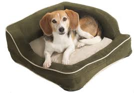 Burrowing Dog Bed by 4 Scary Things In Your Dog U0027s Bed Can Be Harmful To Your Pets Health