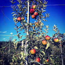 Apple Pumpkin Picking Queens Ny by Products Organic Pick Your Own Raw Honey Maple Syrup
