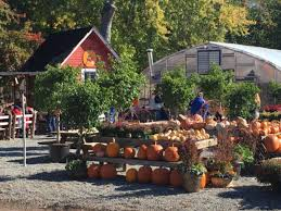 Best Pumpkin Picking Bergen County Nj by 2017 Halloween Weekend Events In Northern New Jersey Westwood